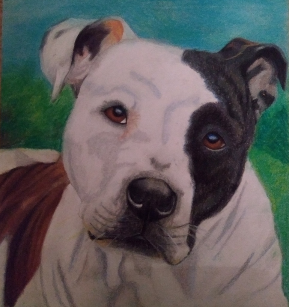 Student artist's rendering of a pitbull
