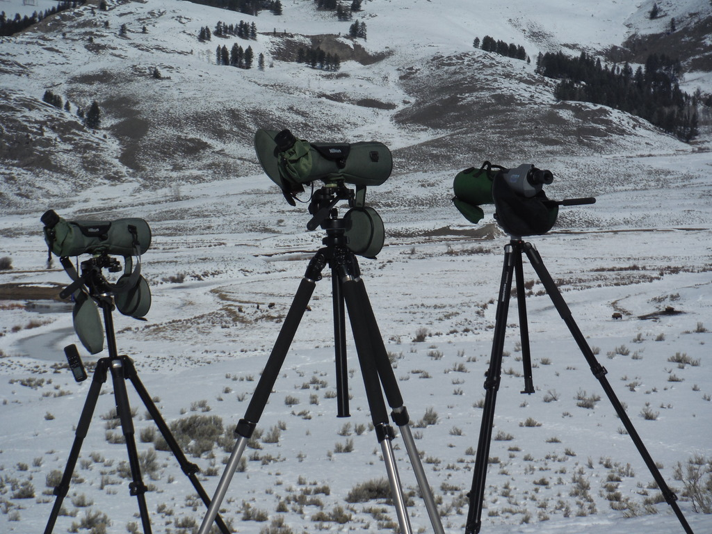 Spotting scopes set up to look for wolves.