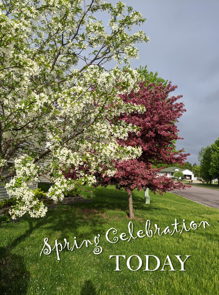 image of flowing trees with words: Spring Celebration Today